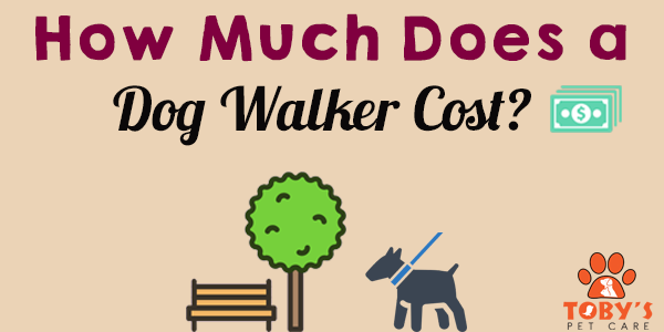 how much does a dog walker cost toby 39 s pet care. Black Bedroom Furniture Sets. Home Design Ideas